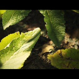 joe-garth-plant-close-02