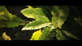 joe-garth-plant-close