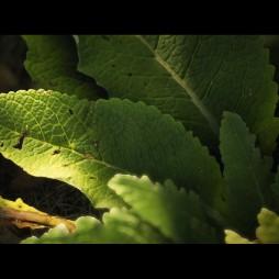 joe-garth-plant-leaf