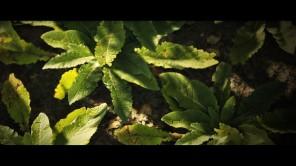 joe-garth-plant-v2